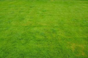 Important Qualities to Look for in a Lawn Care Service