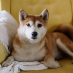 How To Make Your Home Interior More Pet-Friendly