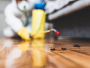 Pest Control Products are they Safe In Your Home?
