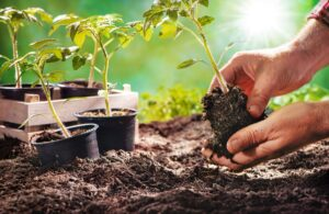 Give your lawn the care it deserves: Fertilization & Weed Control