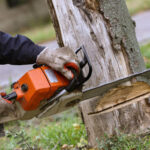 5 Great Reasons to Become a Qualified Tree Arborist