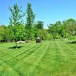 3 Factors to Consider When Choosing a Lawn Care Company