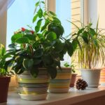 Complete Guide to Caring for Succulents Indoors